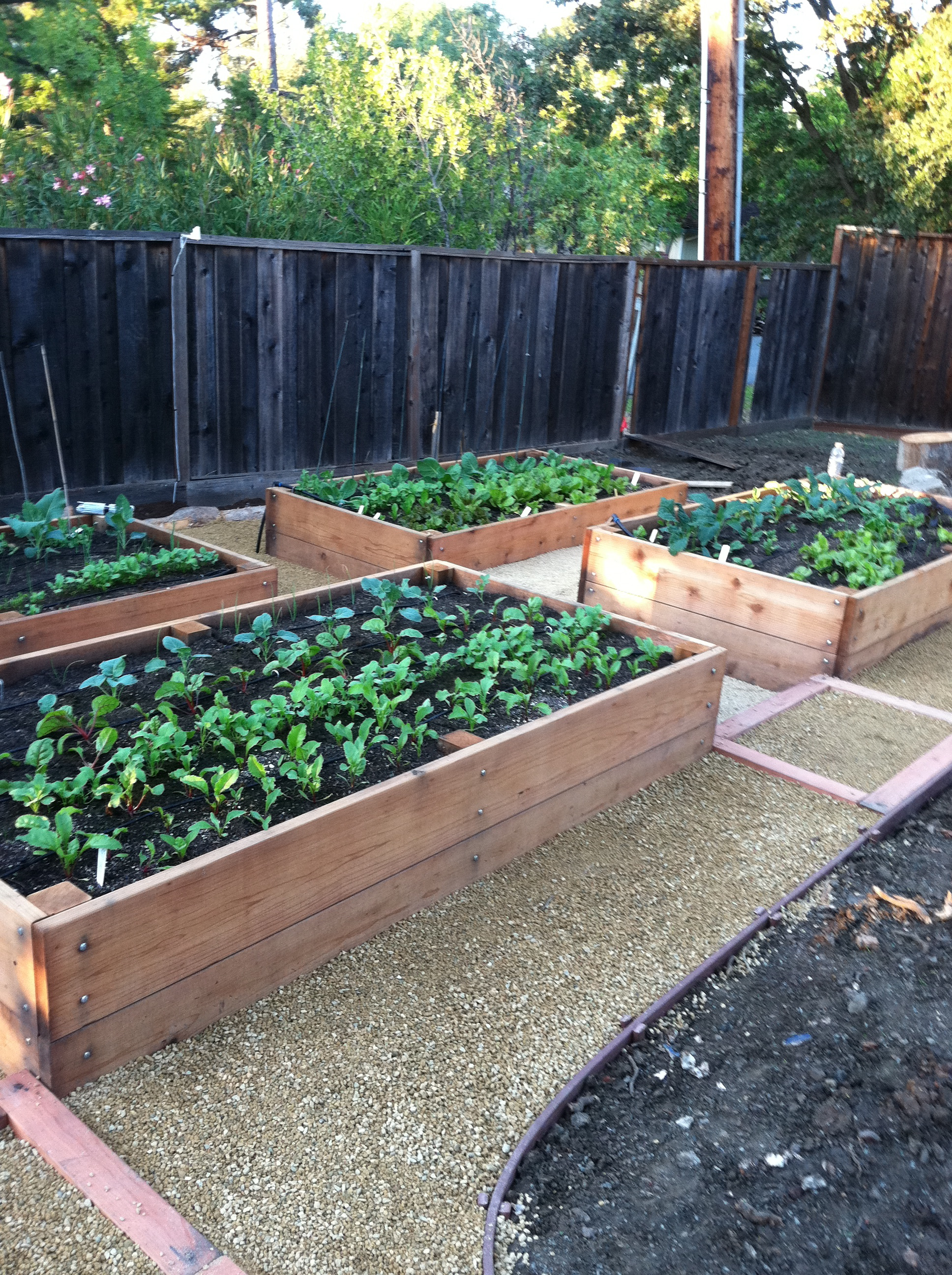 raised veggie beds wildcat farmers